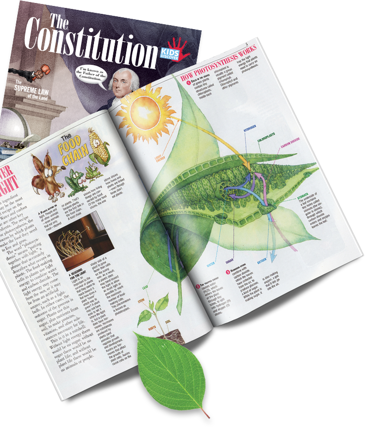 Constitution and Leaf Print