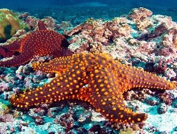 starfish-- large teaser #1