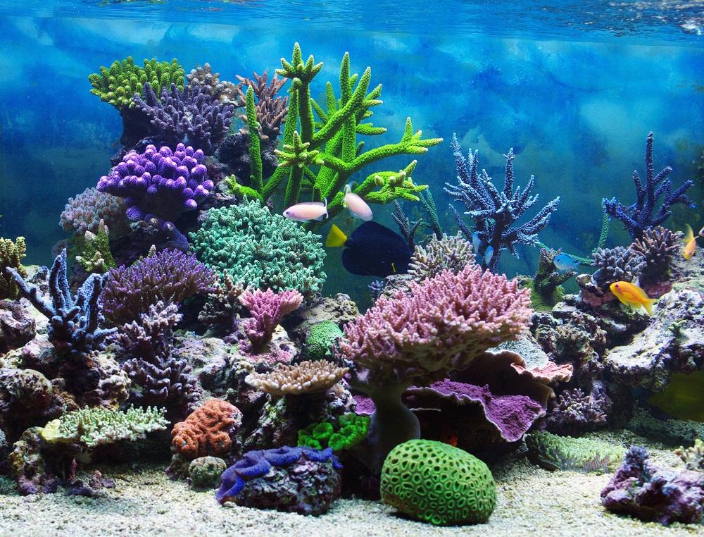 Spotlight: Coral Reefs - KIDS DISCOVER