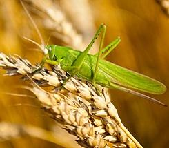Science in the Backyard: Bug Safari