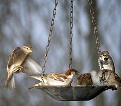 Backyard Science: Feed the Birds