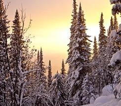 Backyard Science—The Secrets of Winter Trees
