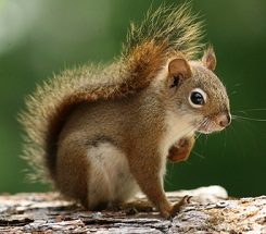 Backyard Science: Fun with Squirrels