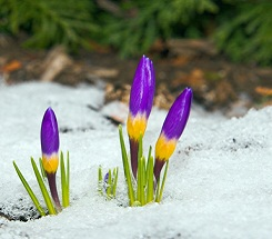 Backyard Science: How Do They Know It's Spring?