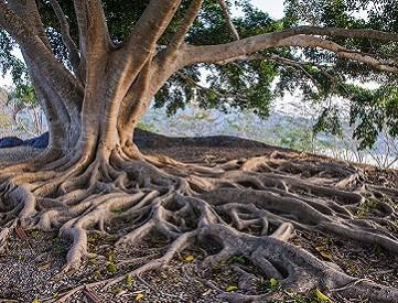 trees home teaser