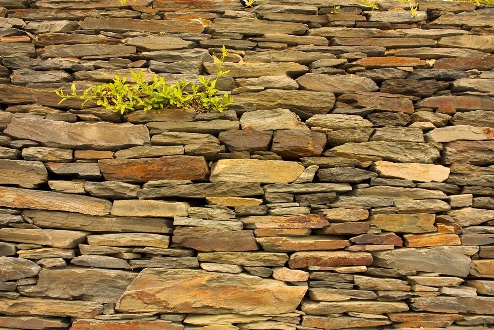 Slate splits easily into flat stones that can be used as roof shingles, paving stones, floor tiles, and blackboards—and for building garden walls. (Toniflap/ Shutterstock)