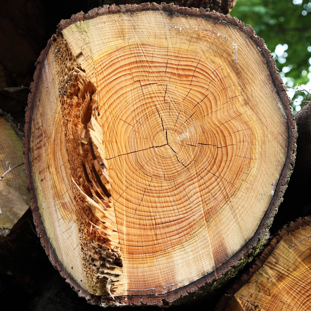 If you look at a freshly cut tree stump, you can count the tree rings to find out how old the tree was. Do you notice that there are alternating light and dark rings? The light rings represent fast growth in spring, and the dark rings represent slower growth during summer and fall. (Federico Rostagno/ Shutterstock)