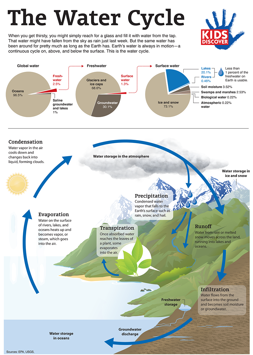 Infographic The Water Cycle KIDS DISCOVER