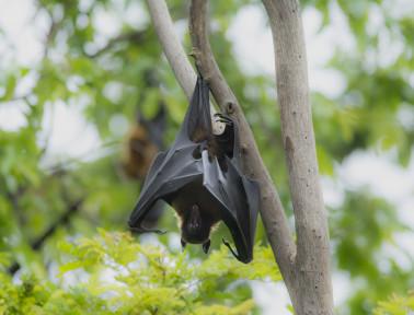Nature's Spooks, Part 2: Bats