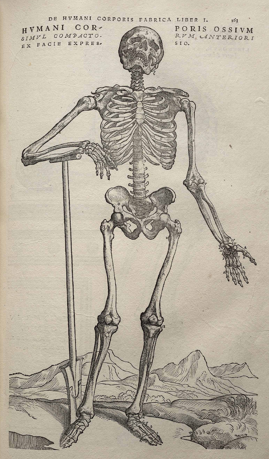 One of the most important scientific books of the Renaissance was On the Fabric of Human Anatomy. Published in 1543, it was a seven-volume work by the physician Andreas Visalius and illustrated by one of the students of the great Renaissance painter Titian. Although the primary purpose of On the Fabric of Human Anatomy was to provide an accurate picture of human bones, muscles, and organs, it is filled with anatomical drawings set in odd places. This skeleton appears to be going on a hike in the Alps. (Image via Wikipedia)