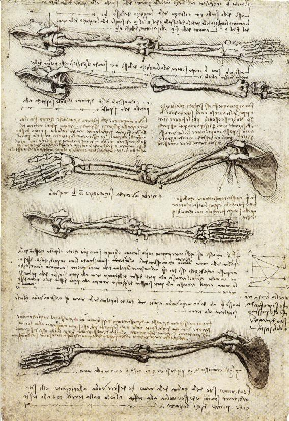 Da Vinci took his anatomical studies further than any other artist, filling multiple sketchbooks with his drawings of the human body and pioneering the detailed documentation of dissections from multiple angles.  (Image via Wikipedia)