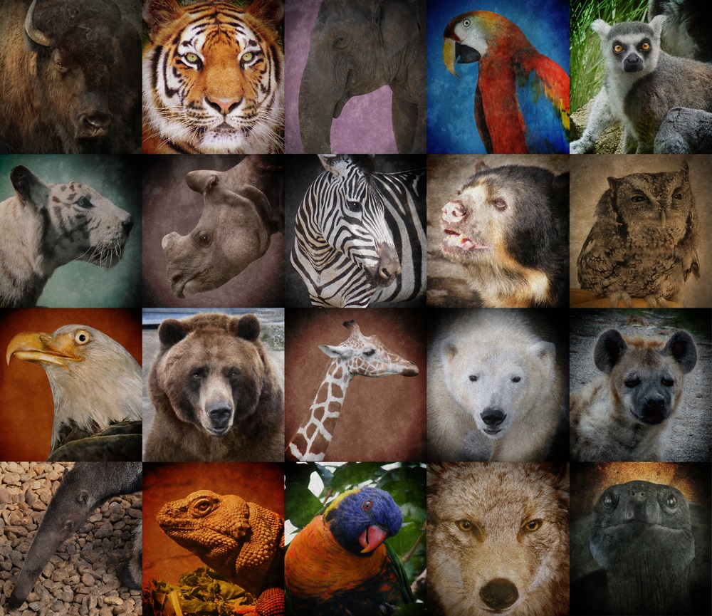 Image result for endangered species