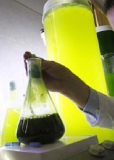Free Light, Fresh Air: The Promise of French Algae Lamps