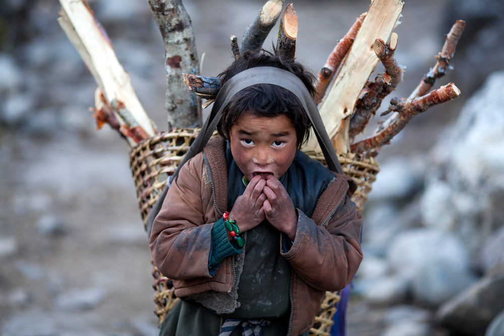 This Nepalese boy is helping gather small logs for heating and cooking. Where trees are too scarce, yak dung is used for fuel. (Zzvet / Shutterstock)