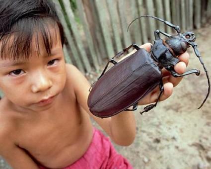 Titan_Beetle