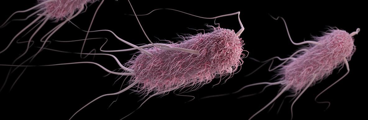 E. coli can contaminate food and cause serious illness (CDC)