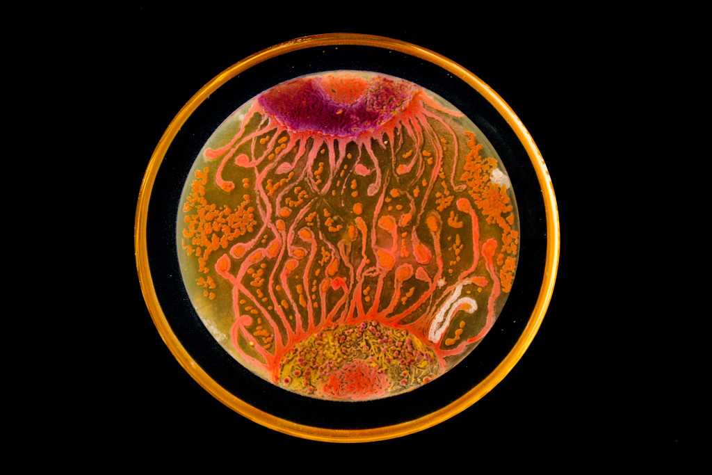 Image via Microbe World
