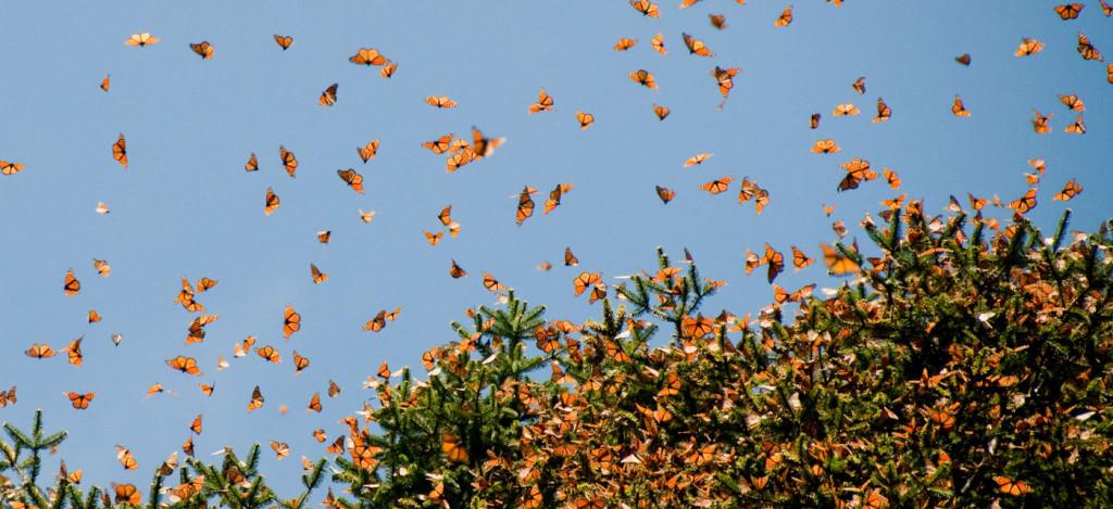 Monarchs_1400