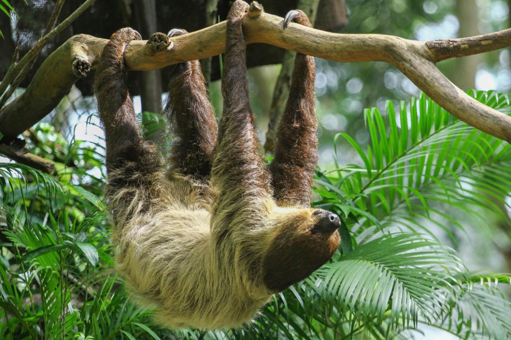 sloth_1060