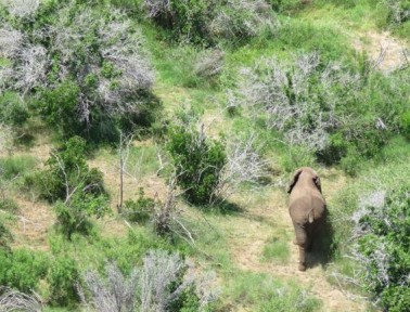 News Wrap: An Elephant Never Forgets, Tully Monster Identified and more