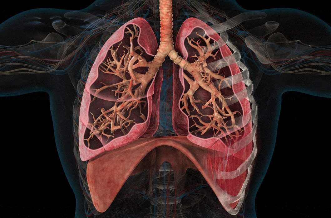 From our Unit on Lungs