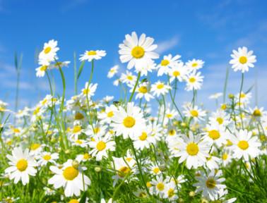 Spring STEM Fun with Flower Chromatography