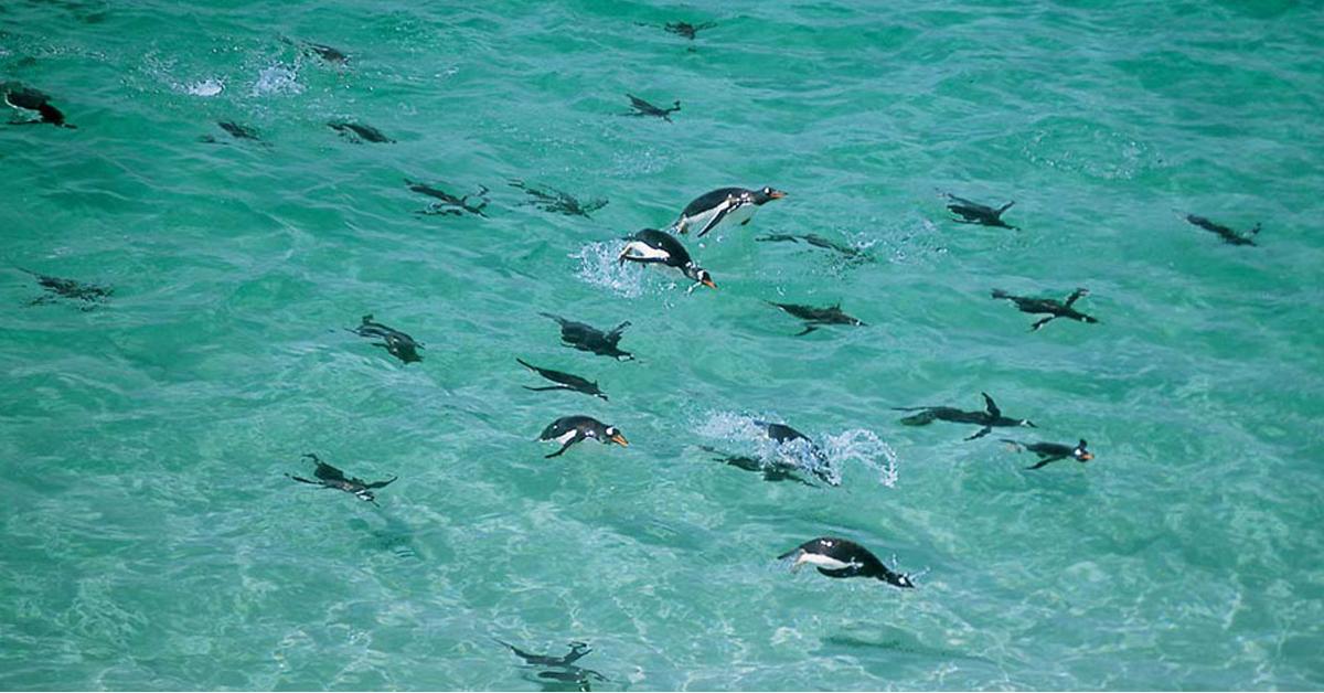 Penguins in Antarctica | Teaching December