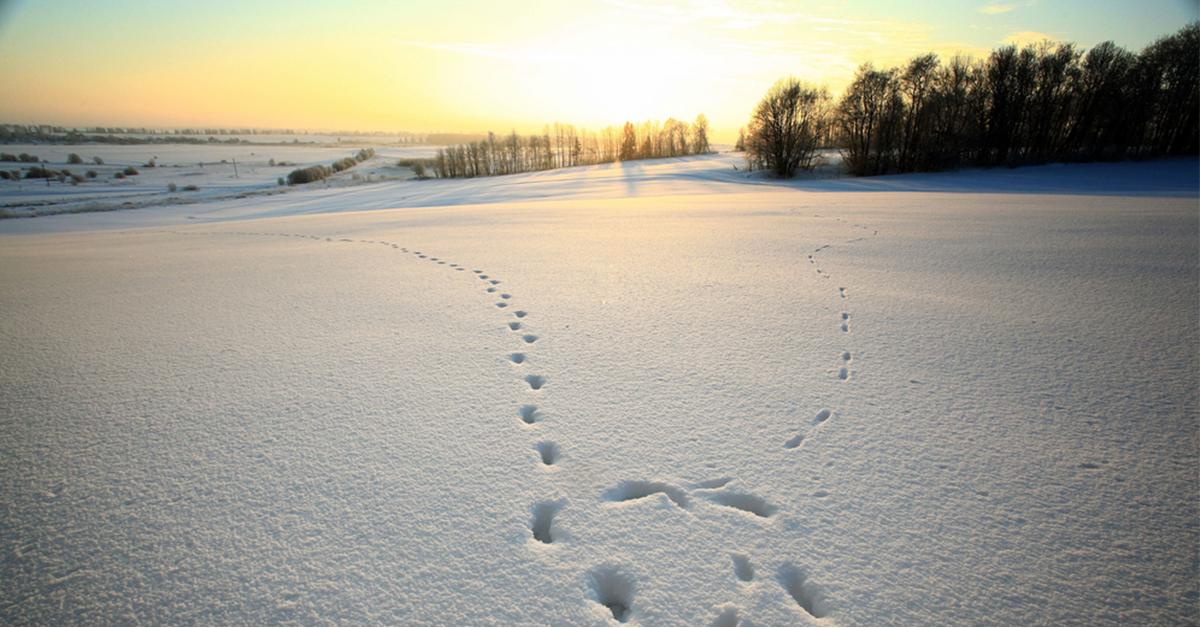 The Hush of Snow | Teaching December 2017