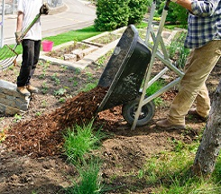 Getting Your Green Thumb On