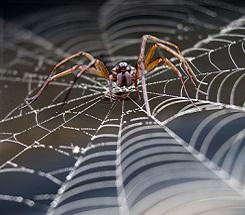Backyard Science: Nature's Spooks