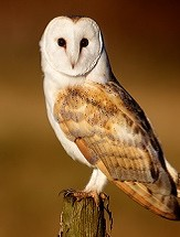 Whoo Wants to Learn about Owls?