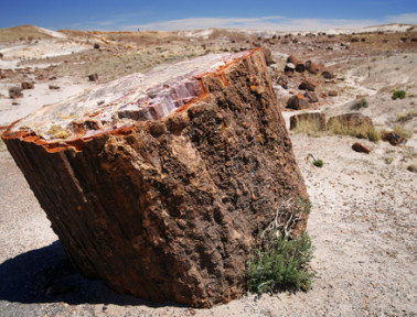 How Prehistoric Trees Became Arizona's Petrified National Forest