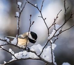Backyard Science: 5 Common American Birds