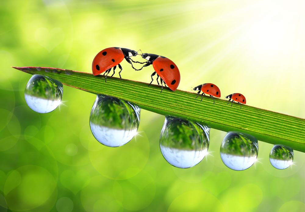 Ideas In Classroom ~ The lost ladybug project kids discover