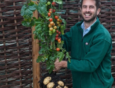 Tomato and Potato Unite on Grafted Hybrid Plants