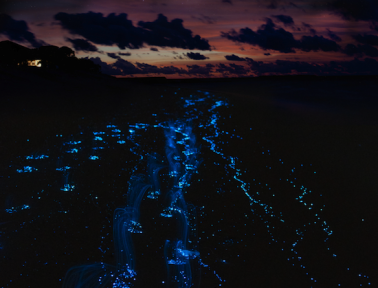 What's Glowing in the Ocean at Night?