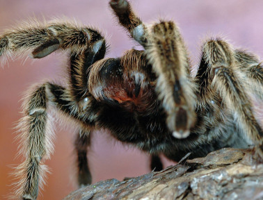 Games and Activities about Spiders